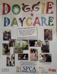 Doggie DayCare @ Saturday Market | | |