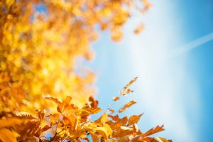 Autumn: connect, reflect & release: A day of Yoga, Ayurvedic food and Writing @ Golden Tree Farm | | |